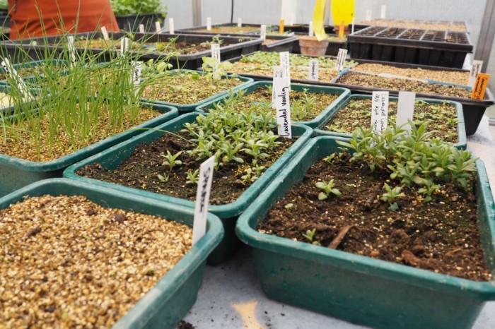 biodynamisk trädgårdsodling_03 (800x533)