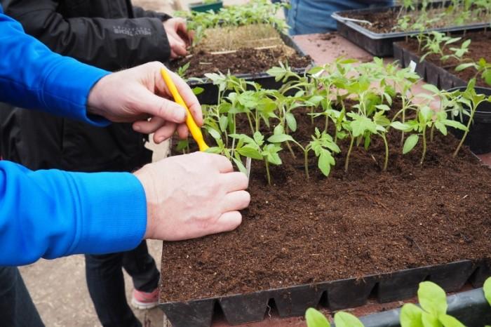biodynamisk trädgårdsodling_08 (800x533)